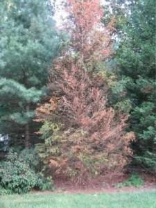 dupont-imprelis-dead-tree