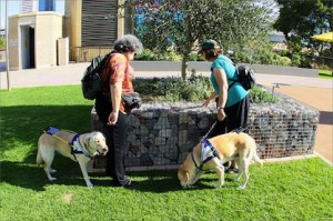 Seeing Eye Dogs for Blind