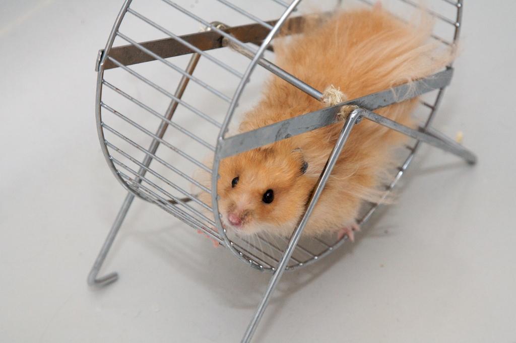 Hamster-Wheel Economics 101