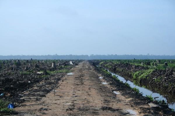 Palm-Oil-Field-Devastation-Environmental-Degradation