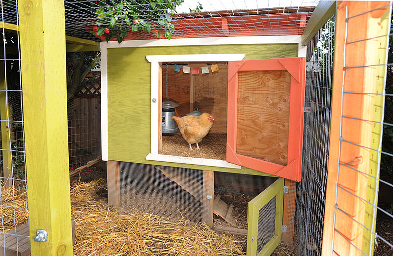 A Great Clucking Idea