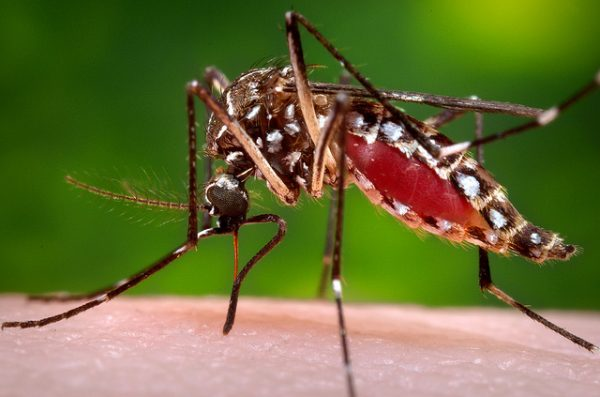 mosquitoes-pest-control-cdc